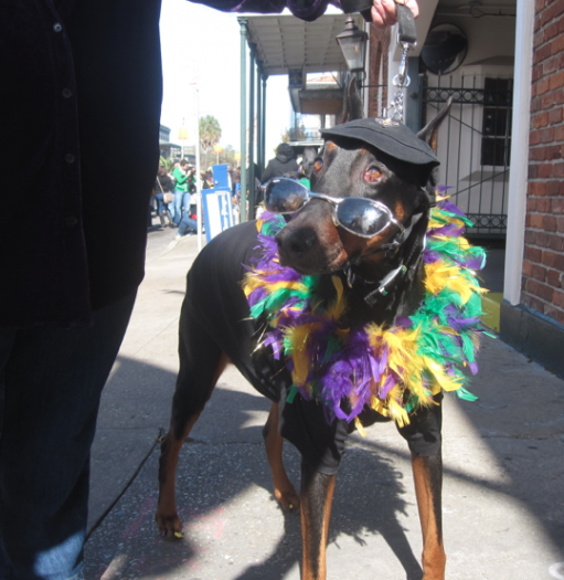 New Orleans dog parade