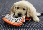 Denver Outlaws Puppy Photo Shoot with Bocklet and Sieverts