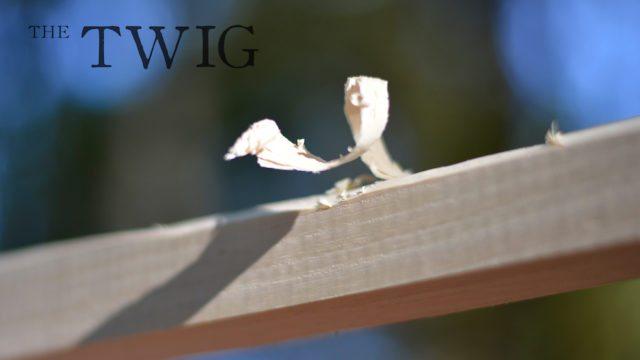 twig-3