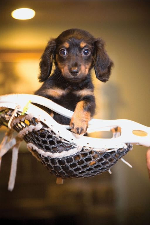 How To Take Care Of Your Lacrosse Dog